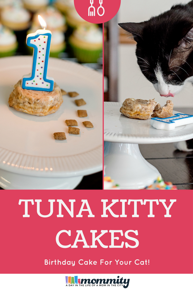 Cat With Birthday Cake How To Make A For Your Recipe Purr