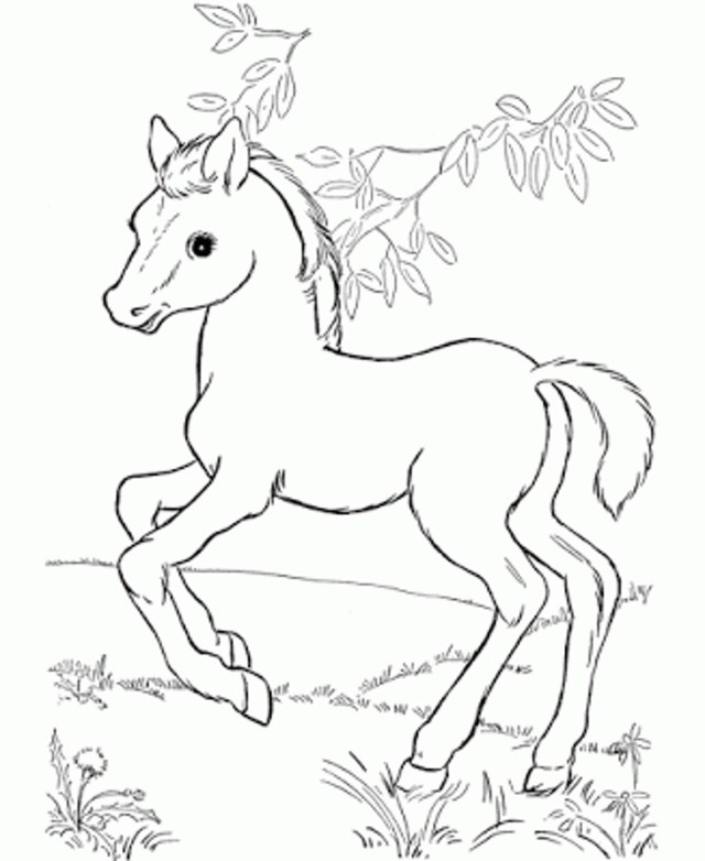 Coloring Pages Horses Coloring Pages Printable Realistic Horse Coloring Pages Free