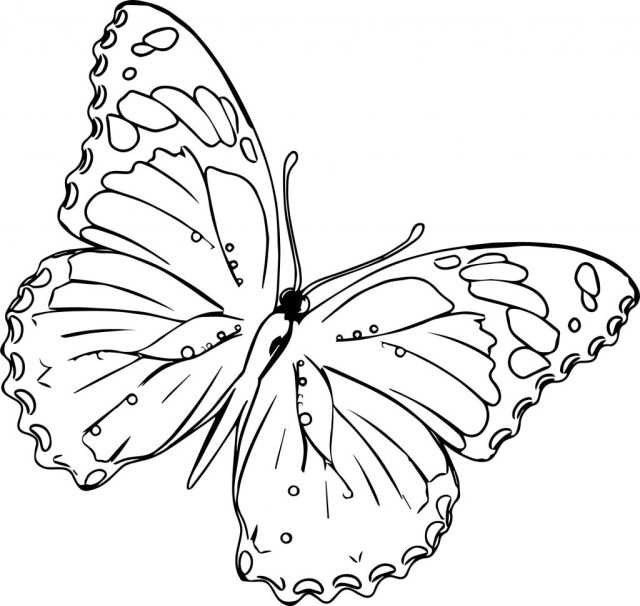 Free Butterfly Coloring Pages Coloring Pages Free Online Butterfly Coloring Games New Pages