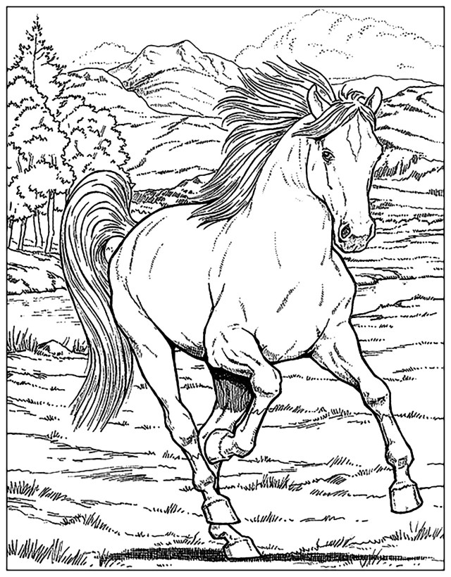 Horse Coloring Page Horse Horses Adult Coloring Pages