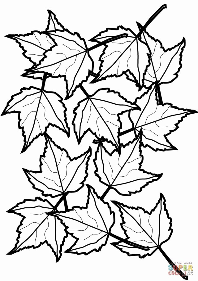 Leaf Coloring Page Cooloring Book Fall Leaves Coloring Sheet Free Printable Template