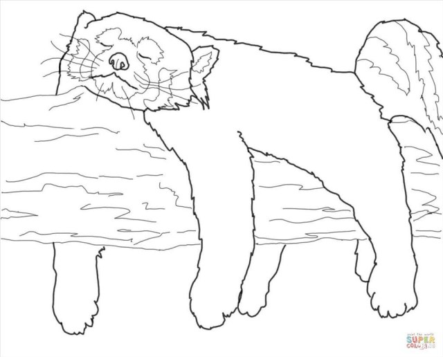 Red Panda Coloring Page Red Panda Coloring Page Itsamansworld Me Throughout Bertmilne