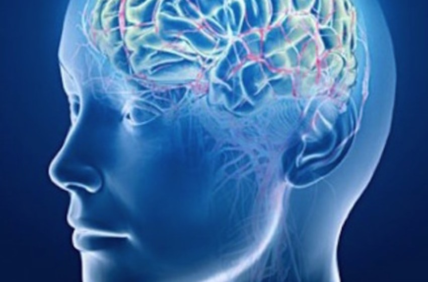 10 Things you should know about your brain