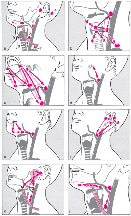 Management Of Lateral Neck Masses In Adults Manual Guide