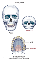 Pharyngeal-Oral Function and Speech Production