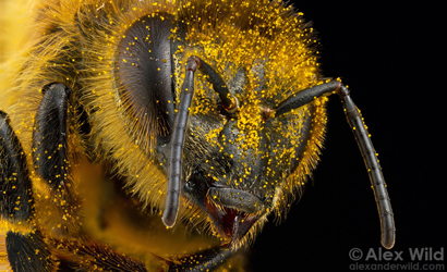 Honey Bee Super Foragers Can Be Replaced By Hive Mates If