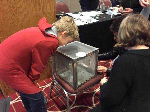 A young attendee peers in at a cage of black flies.