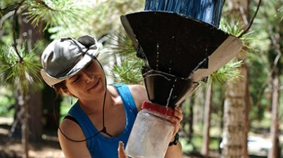 Annie Ray checking insect trap