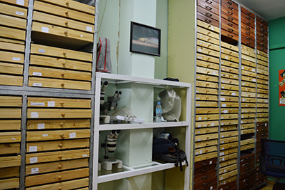 CEI insect collection