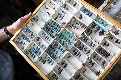 O'Brien insect collection