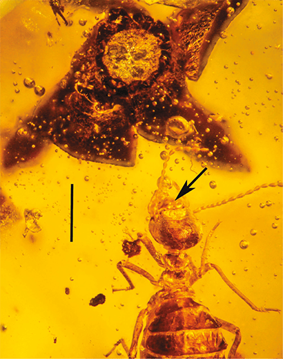 termite in amber with milkweed flower