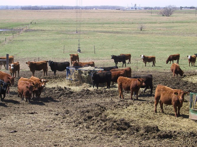 UNL ARDC pasture