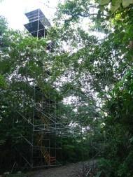 scaffolding in Panama rain forest