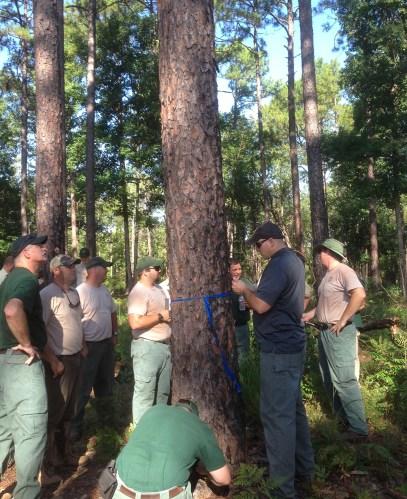 David R. Coyle, Ph.d., forest extension