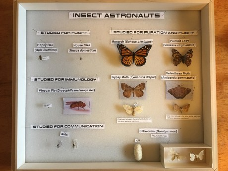 insect astronauts display