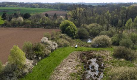 malaise trap in German field
