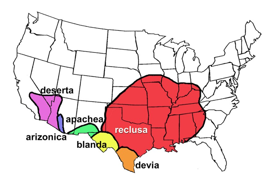 brown recluse range map
