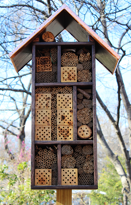 How Bee Hotels Support Urban Pollinators And Educate Locals On One