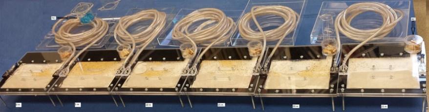 termite colony experiment setup