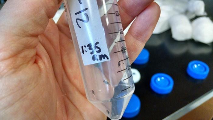 spotted-wing drosophila in vial