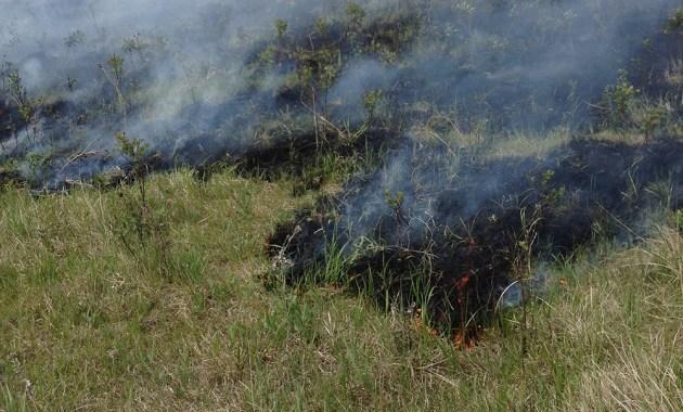 grassland patch burn