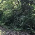 zoo foliage