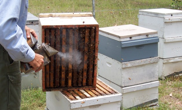 bee hive smoking