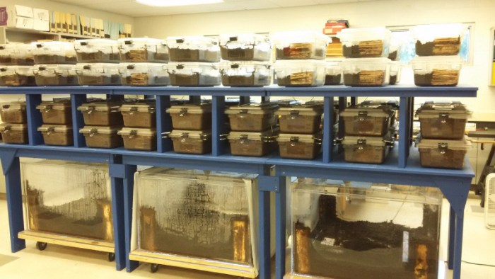 lab-reared termite colonies in containers
