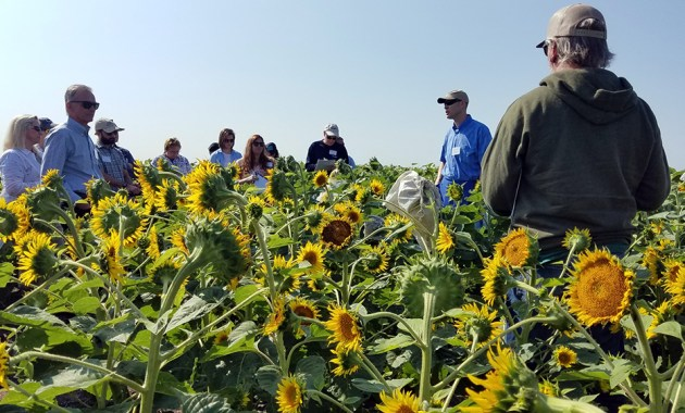 Tour participants at USDA-ARS and NDSU research farm