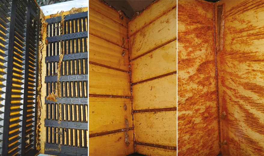 How Beekeepers Can Foster Propolis Production for Better Hive Health