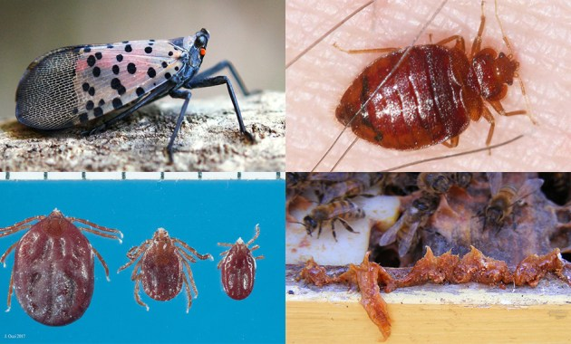 Entomology Today best of 2018