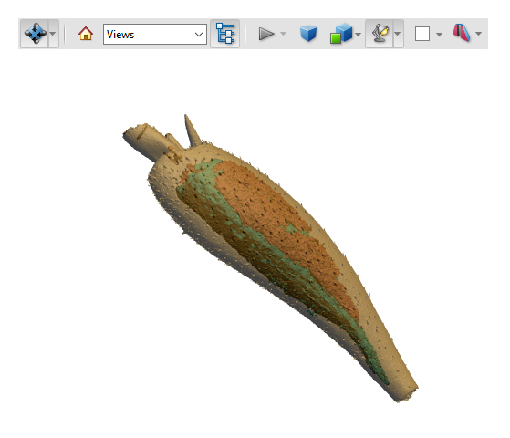 gasteruptiid tibia 3D model screenshot