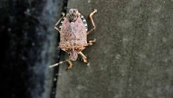Invasive Insects: The Top 4
