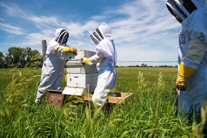 bee hives at North Dakota State University
