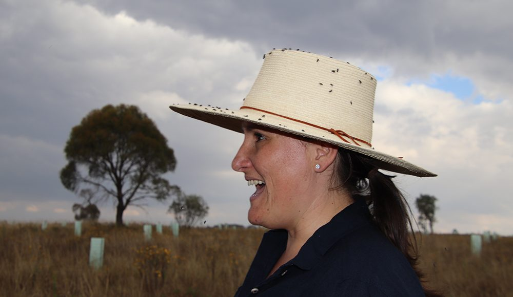 """How an """"Accidental Entomologist"""" Connects Disparate Fields to Study Insect Ecology"""