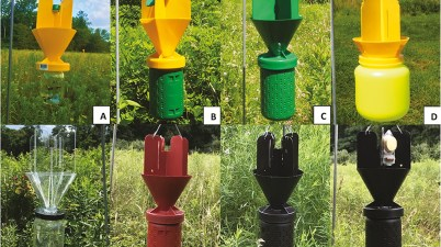 Japanese beetle traps