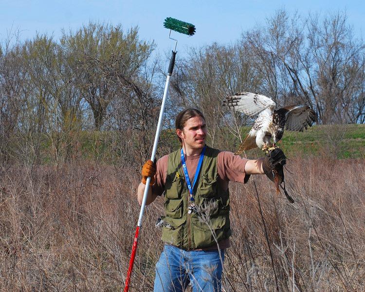 Michael Skvarla with hawk