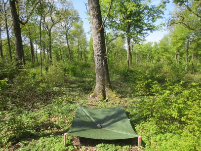 tarp for collecting fallen caterpillars