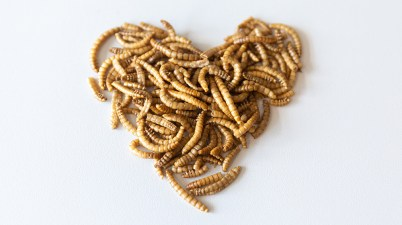 Insect food in a heart