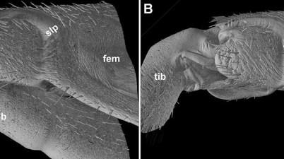 Micro-CT micrographs
