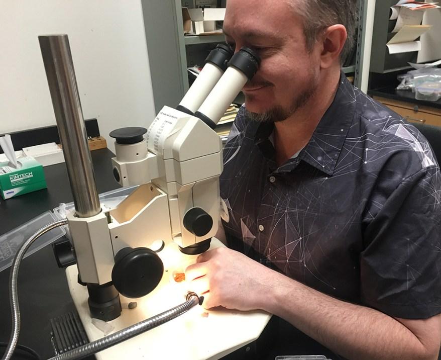 Roger Burks examines amber