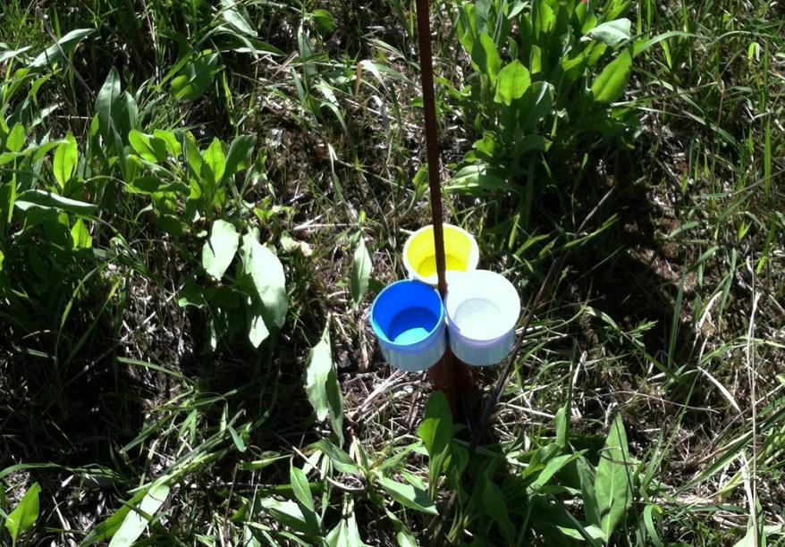 bee bowl traps