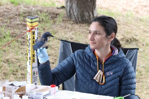 Elissa Olimpi with California Scrub Jay