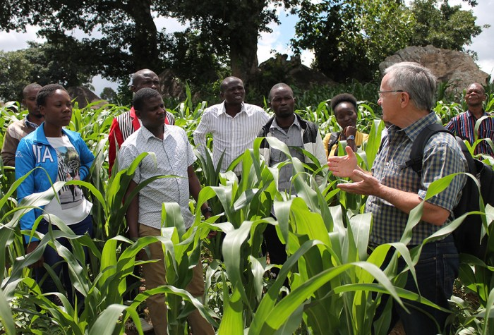 fall armyworm scouting in Malawi