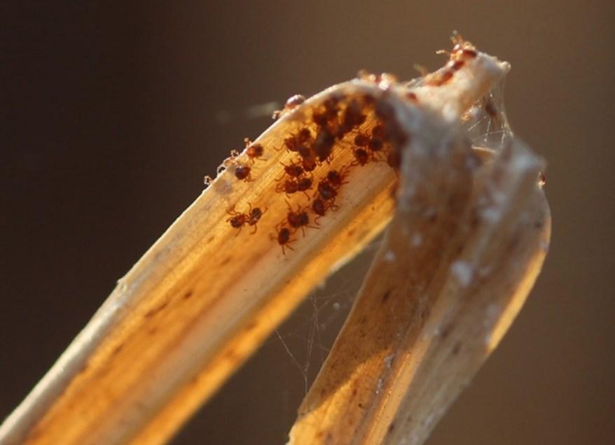 Questing ticks