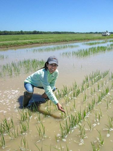 Lina Bernaola at LSU Rice Research Station