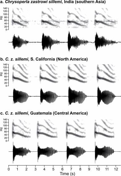 Chrysoperla zastrowi song graphs
