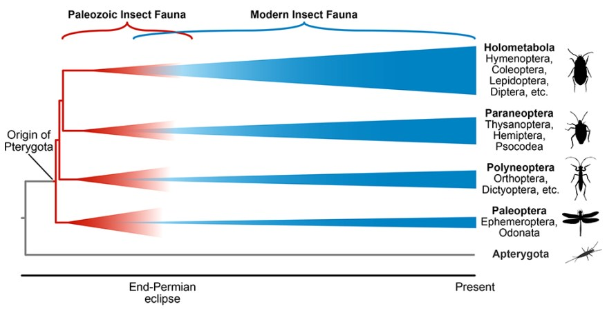 Paleozoic and modern insect faunas