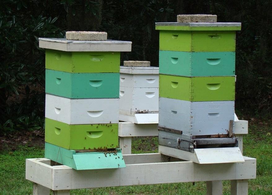 honey bee hive boxes