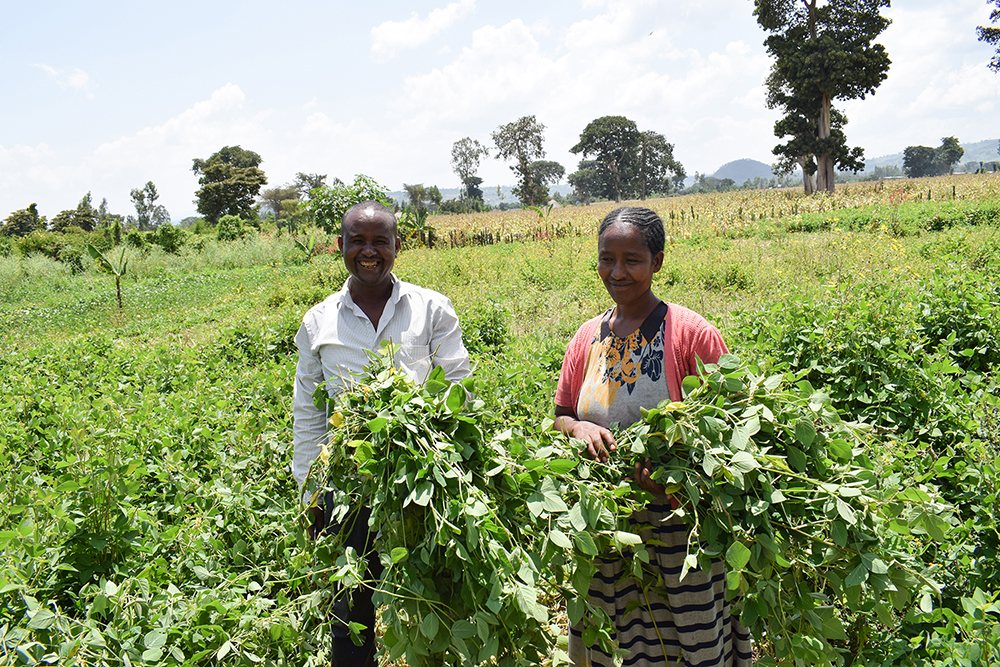 IPM Packages Streamline Crop-Pest Solutions in Developing Countries